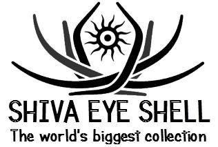Shiva Eye Shell