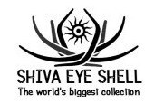Shiva Eye Shell Thailand