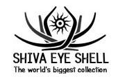 Shiva Eye Shell Thailand